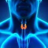 Thyroid – I've heard of it but what is it?