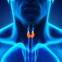Thyroid – I've heard of it but what is it?